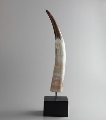 Horn Show piece