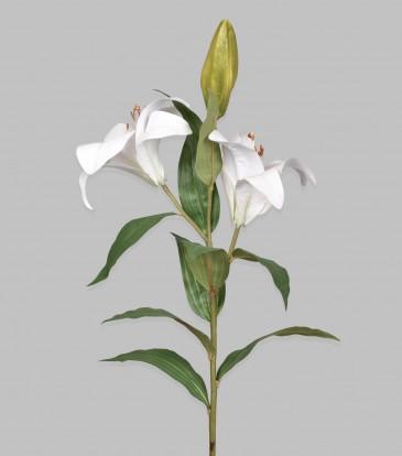"White Lily 25"""