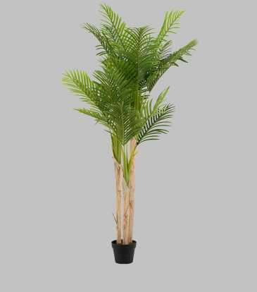 Fern Tree Potted Large