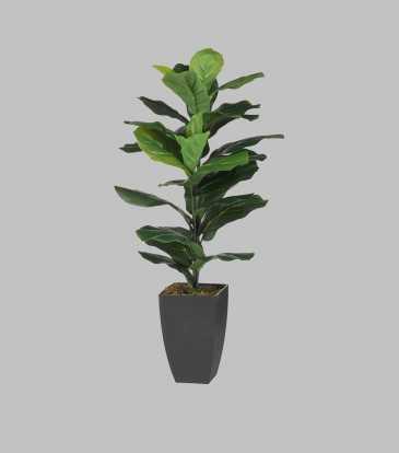 Fiddle-Leaf Fig Potted Plant