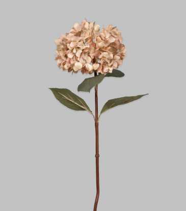 "Hydrangea Cream 31.5"""