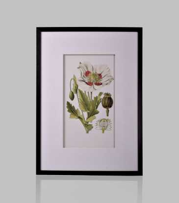 Hyacinth Flower Wall Art