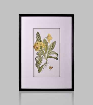 Dogwood Flower Wall Art